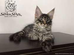 Монопитомник UA* Seven Stars открыт резерв на котят. 3