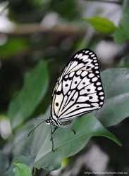Бумажный змей - живая бабочка для подарка на свадьбу. 1