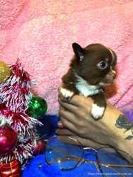Mini шоколадик под ёлку 2
