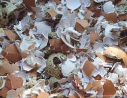 Яичная скорлупа очень мелкого помола 1
