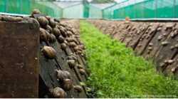 Зберігання Равликів камера та заморозка Равликів Тернопіль 1