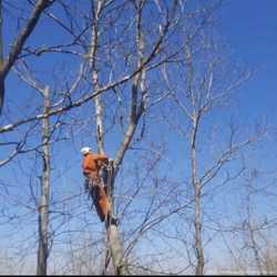 Спил та чистка дерев