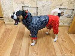 Дождевик для собачки в горошек