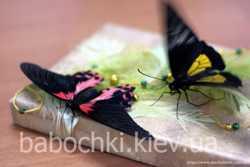 Продажа живых тропических бабочек для праздников, салютов, подарков. 1