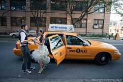 162 Ford Crown Victoria New York city taxi аренда 1