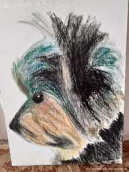 Выполняю портреты животных