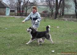 Дрессировка собак в Донецке, выгул, хэндлинг (подготовка к выставкам), помощь при вязках.