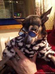 """Солнезащитные очки для собак со стеклами типа """"Хамелеон"""""""