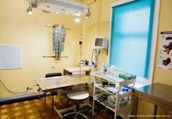 Ветеринарная клиника «Айболит» г. Чернигов 3