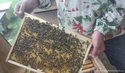 Пчелосемьи на дадановскую рамку. 1