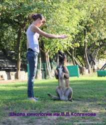 Цирковая (трюковая ) дрессировка собак.