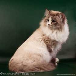 Фотограф для ваших любимых домашних животных, Киев. 2