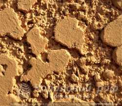 Фасад Крокодил Кораловий Риф