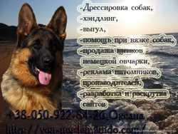Дрессировка собак в Донецке, выгул, хэндлинг (подготовка к выставкам), реклама, помощь при вязках.