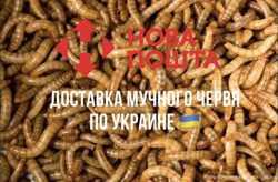 Мучной червь/ корм для птиц и рептилий / зоофобус / зофобус / мучник