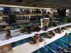 Зберігання Равликів камера та заморозка Равликів Тернопіль 2