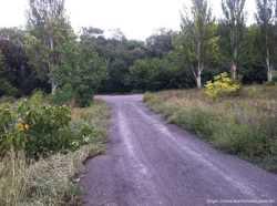 Продам 1-2 земельные участки на Рублёвке. 2 участка по 10 соток рядом.