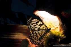 Бумажный змей - живая бабочка для подарка на свадьбу. 2