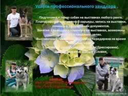 Подготовка к выставке щенков и взрослых собак